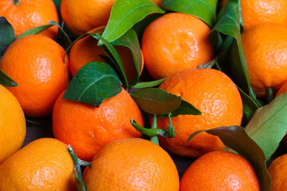 新鲜的砂糖橘
