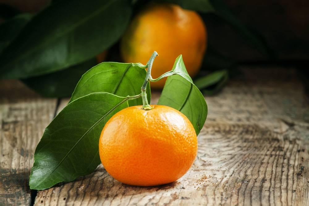 刚采摘的砂糖橘