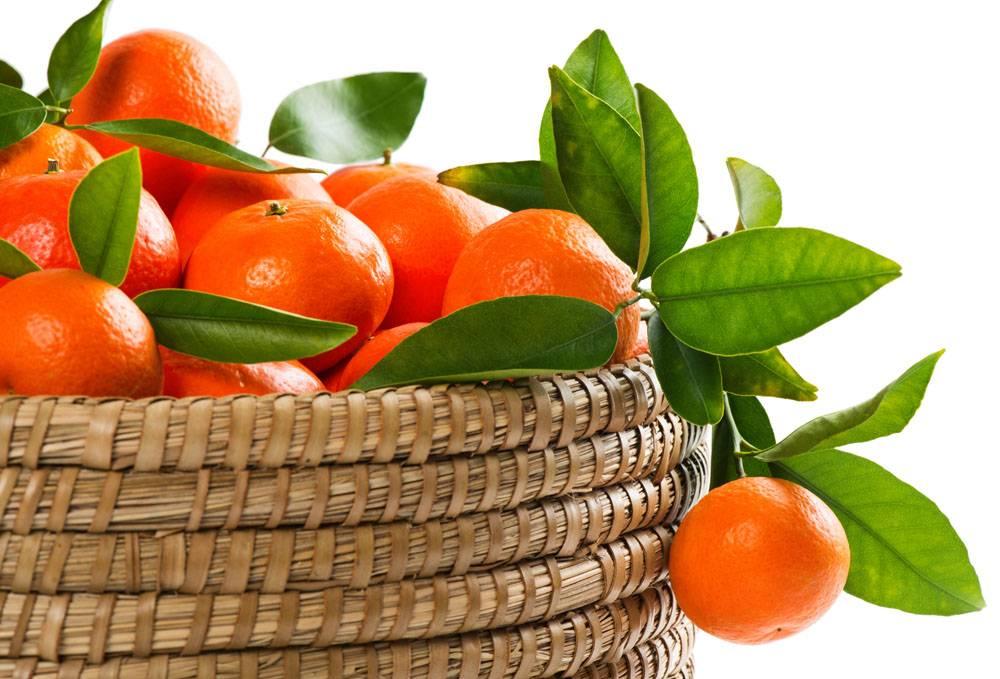 篮筐中的砂糖橘